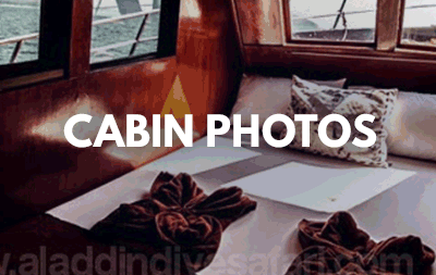 Cabins of our liveaboard